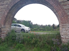 Flowers grow under the arches