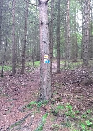 Yellow and blue markings on a tree, marking routes