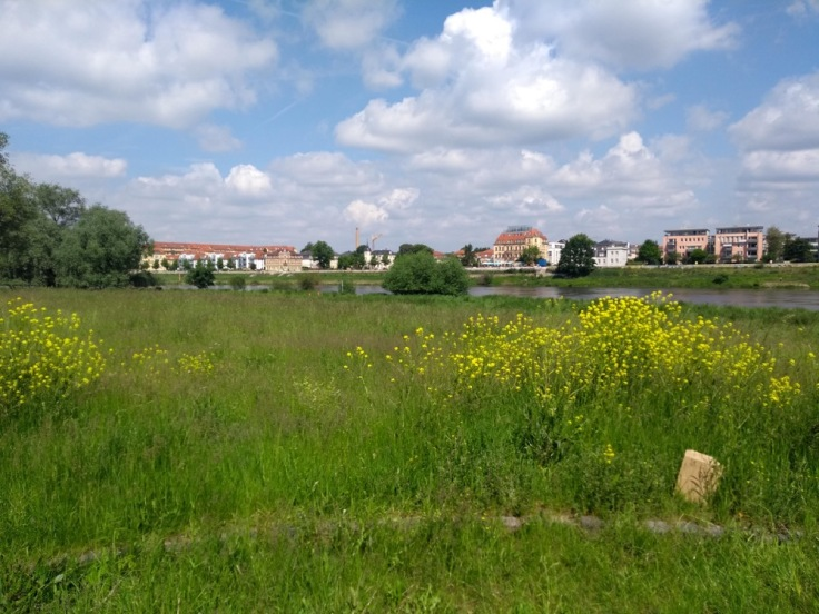 Wild flowers, long grass and the River Elbe