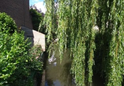 Willow tree overlooks a canal