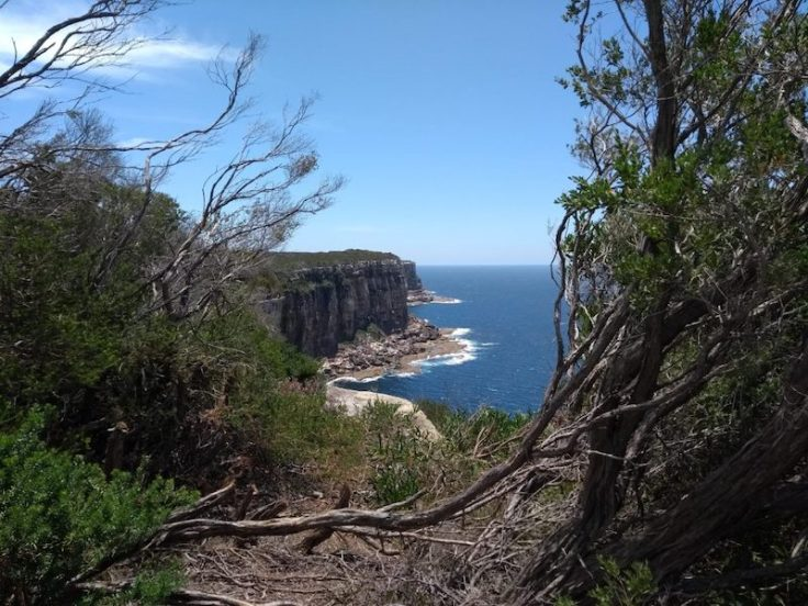 View through trees over cliffs and sea