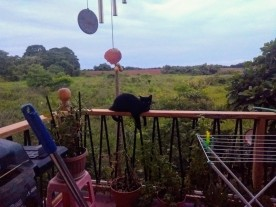 Puff, lounging on the balcony railing. View of fields stretching away behind, brown and green