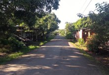 A shot down a residential street, greenery as visible as the small one-storey houses