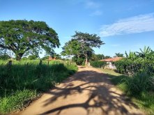 Unsealed dirt road out towards more houses, thick vegetation to the sides