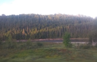 Grass then river then pine trees filling a hill behind