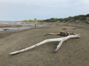 Wish bone driftwood on the beach