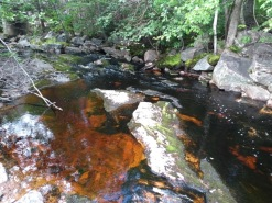Red-tinged water where it has flowed over iron