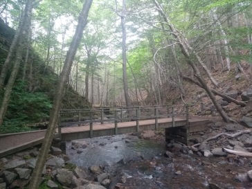 Small bridge over a stream, wooded forest on either side