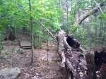 A fallen tree rots by the side of the trail