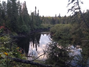 A small lake surrounded by pine trees