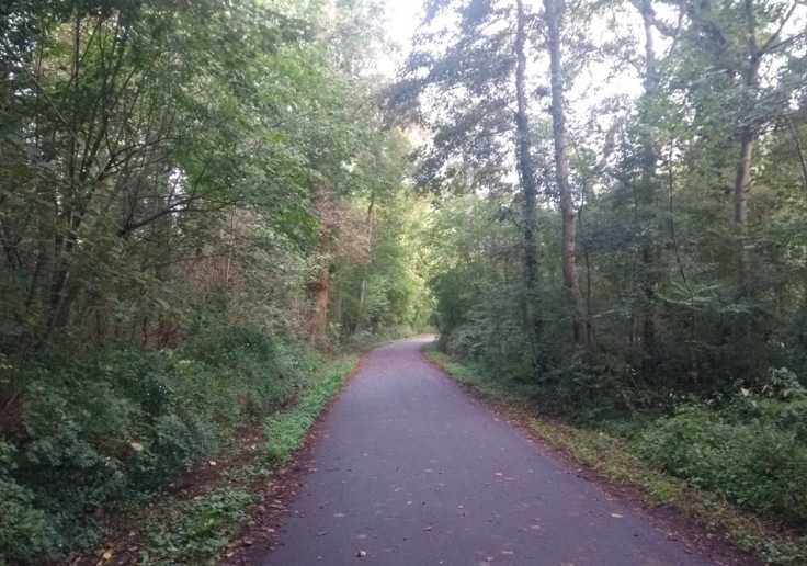 Wide tarmac path with trees on both sides
