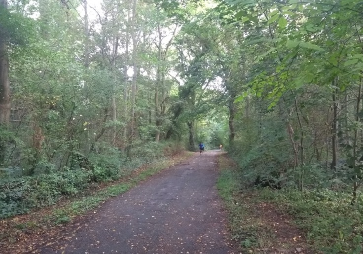 Finishing straight; hard-packed path, with trees on either side