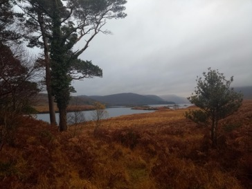 Orange scrub overlooking a lough, with hills behind