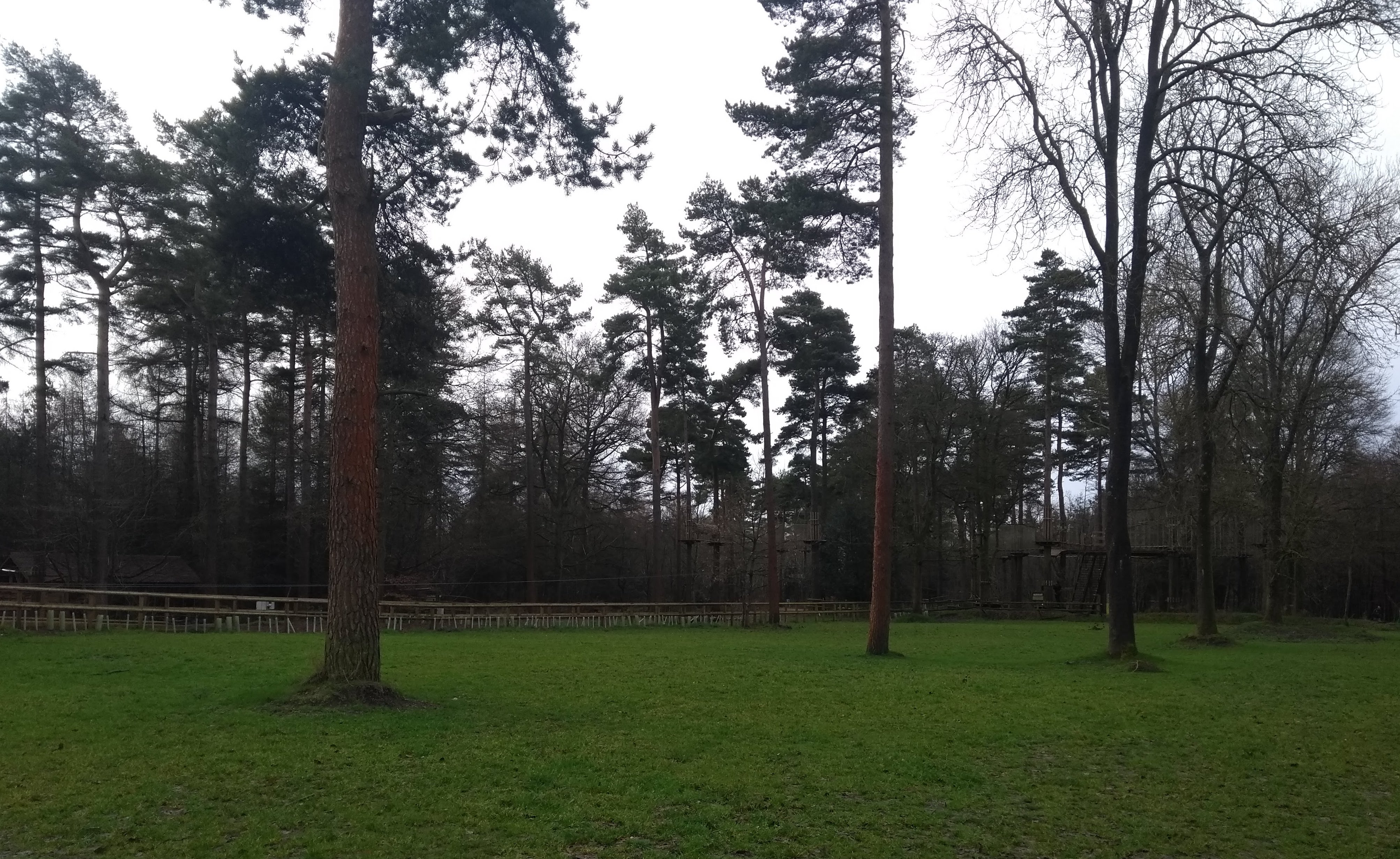 Tall trees and green grass in the park