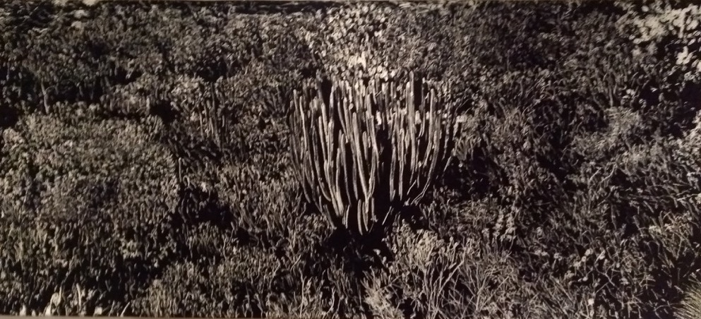 Black and white tapestry, of plants growing